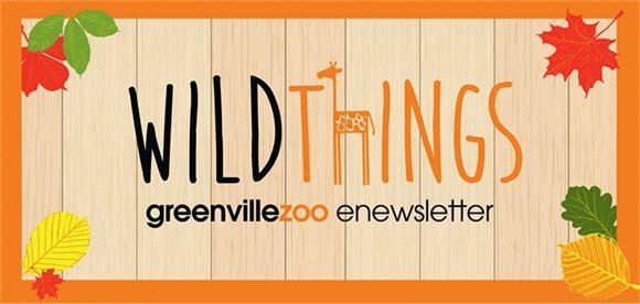 Wild Things Greenville Zoo Enewsletter