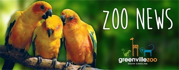 Greenville Zoo News