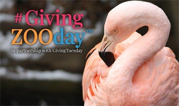 #GivingZooday