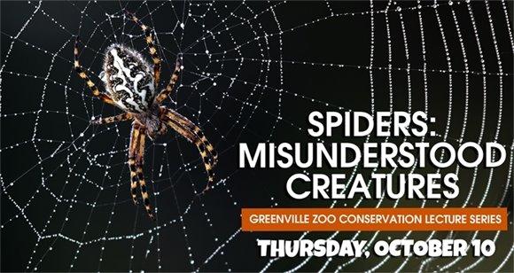 Spiders: Misunderstood Creatures