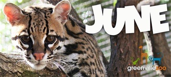 Zoo News June 5