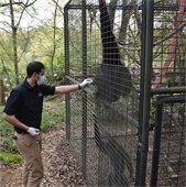 Greg with Siamang gibbons