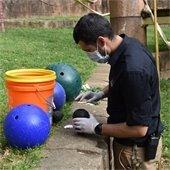 Greg preparing Orangutan enrichment