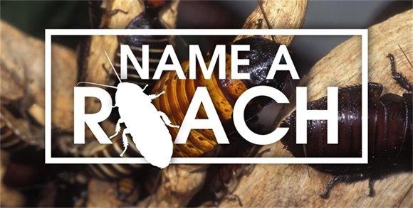 Name a Roach