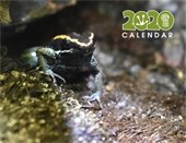 Greenville Zoo Calendar