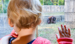 a boy looking through the observation glass at an orangutan