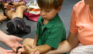 boy holding a centipede in his hand