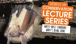 flyer to promote lecture on bat conservation