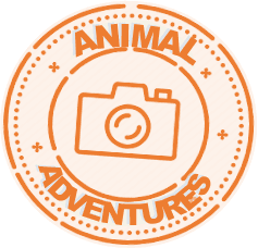 animal adventures logo