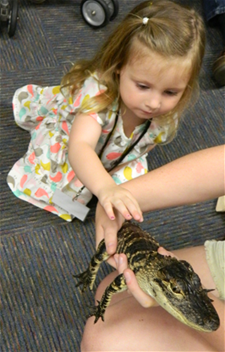 Young Girl Meeting a Young Alligator