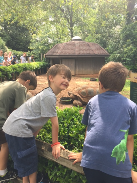Kids Looking into a Giant Tortoise Exhibit