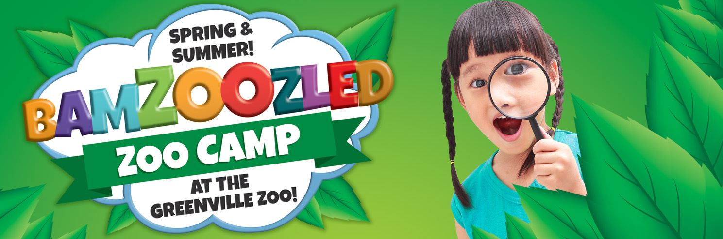 ZOO CAMP BANNER 2018