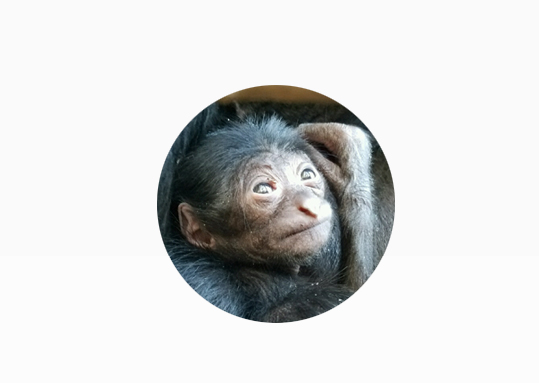 website siamang circle.jpg